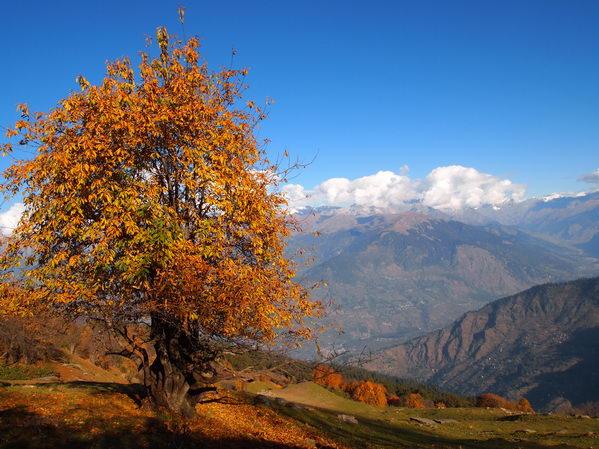 https://www.yogi.lt/wp-content/uploads/2011/02/daivos_nuotr_himalaja.jpg