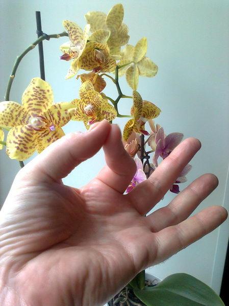 http://www.yogi.lt/wp-content/uploads/2011/06/nuotrauka0038.jpg