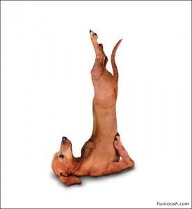 yoga_dogs_1